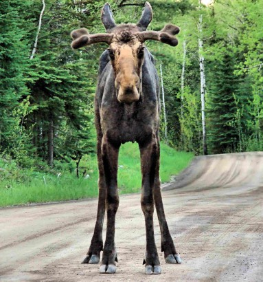 Young Moose/ Crystal Clemons